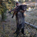 alberta canada wolf hunts